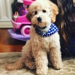 heather-bosserman-petite-lola-pup-18-lbs-4-5-months-old