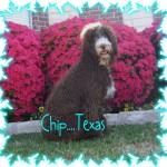 Chip..Texas..