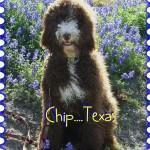 Chip..Texas