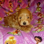 Twinkie Girl #1..SALE PENDING! Derodes Family OH