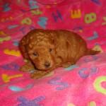 Twinkie Girl #1