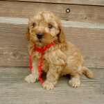 Layla Girl #5..SALE PENDING! Crawford Family OH