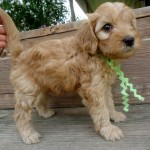 Layla Girl #7..SALE PENDING! Nickels Family OH