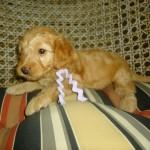 Layla Girl #8