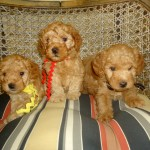 Layla Curly Gold Girls