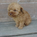Pica Boy #1..SALE PENDING! Turner Family KY