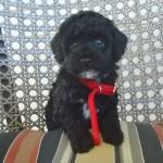 Pippy Boy #1