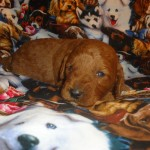 Carrie BOY #2..SALE PENDING! Swigart Family OH
