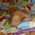 Lola BOY #2
