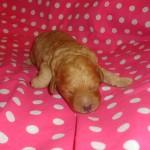 Lola GIRL #2