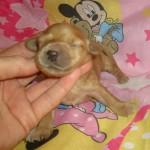 Lola GIRL #3