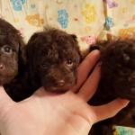 Truffles All pups