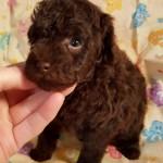 Truffles Boy