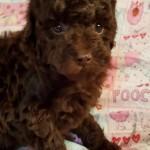Truffles Girl #2