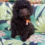 Coco BOY #2