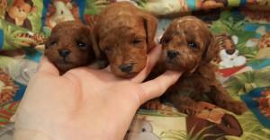 Mindy ALL pups