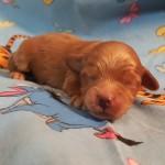 Twinkie Boy #2