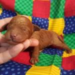 Twinkie Boy #3