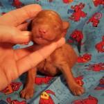 Twinkie Boy #4