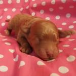 Twinkie Girl #2